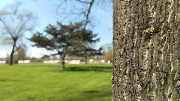 HTC_M9_arbre avec bokeh