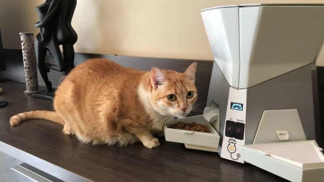 petpresso un distributeur de croquette et d eau connect pour votre chat. Black Bedroom Furniture Sets. Home Design Ideas