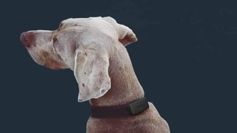 Invoxia Pet tracker