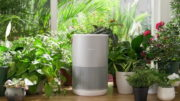 Smartmi P1 Purifier